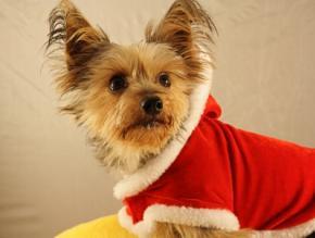 verkleidung zu weihnachten weihnachtskost me sind in. Black Bedroom Furniture Sets. Home Design Ideas